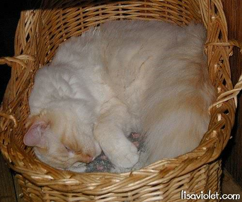 Sammy in the same basket as at the top of the page