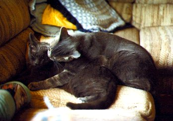 deejay cleans his sister, annie